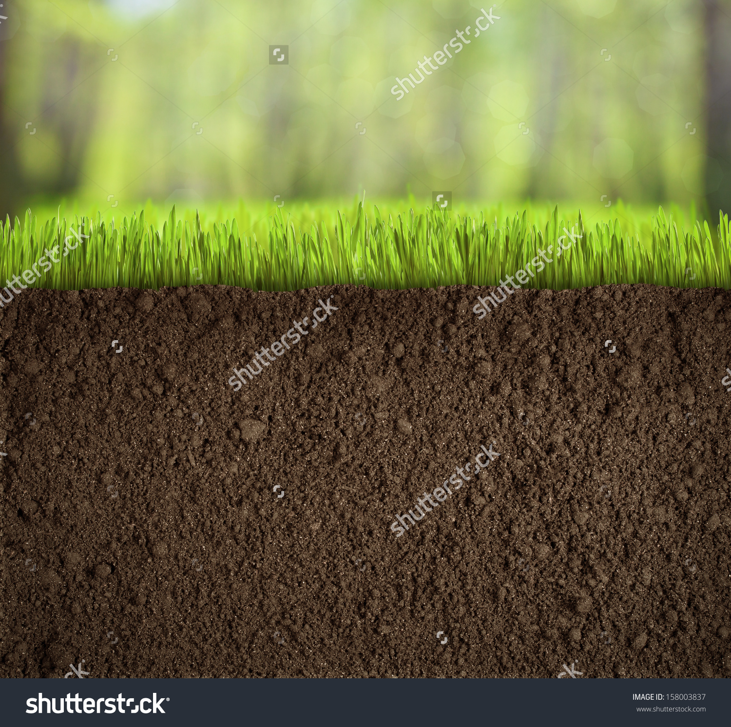 Soil Under Grass Forest Stock Photo 158003837.