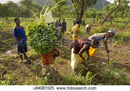 Stock Image of Women preparing soil for planting with man dressed.