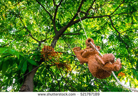 Monkey Hanging From Tree Stock Photos, Royalty.