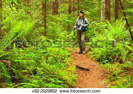 Stock Photo of Gnat Creek Trail, Clatsop State Forest, Oregon. v82.
