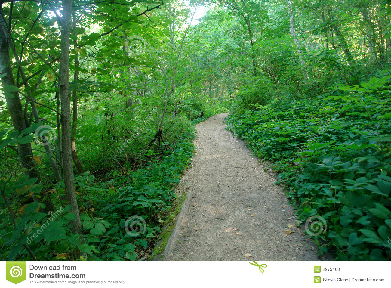 Trail Through Forest Stock Photos.