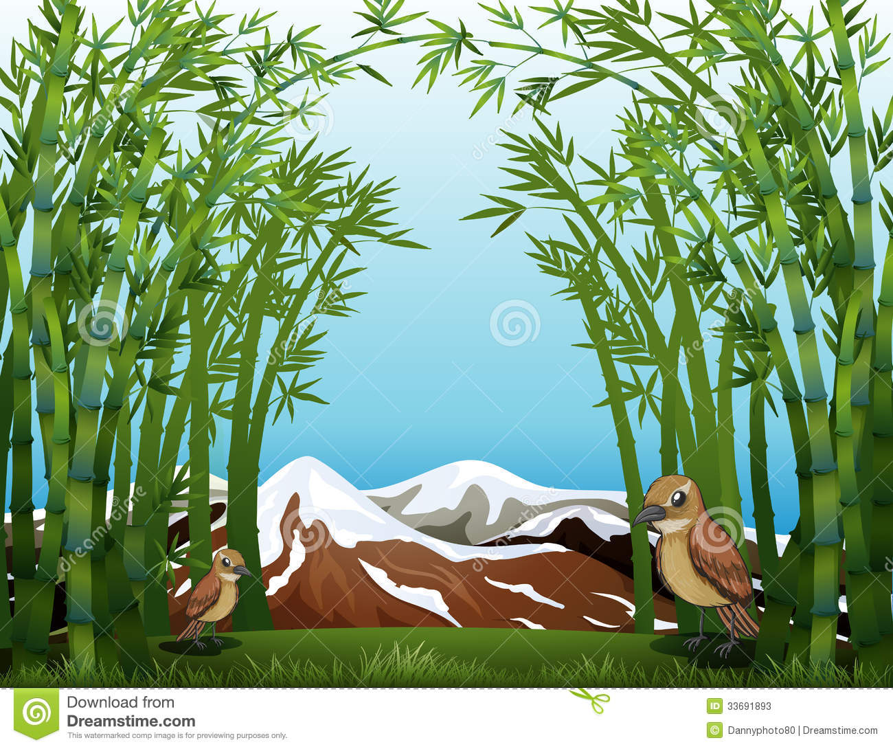 A Bamboo Forest View Stock Photos.