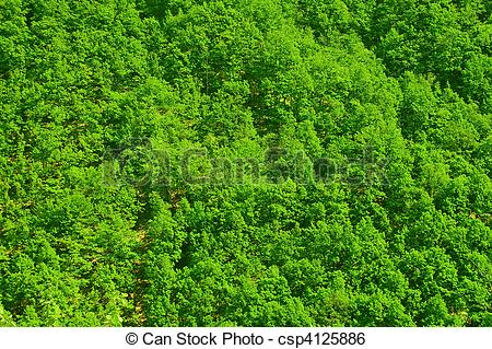 Stock Image of forest top view csp4125886.