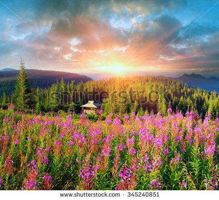 Fireweed Mountains Stock Photos, Royalty.