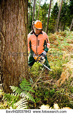 Stock Photo of A woodcutter at work in the forest ibxvth02037843.
