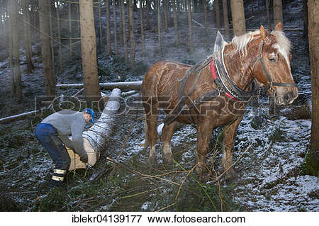Picture of Forest worker and logging horse doing forest work.