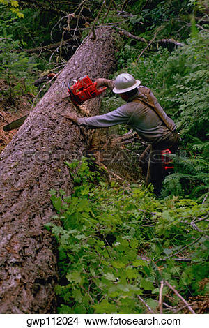 Stock Photo of Forestry worker with fallen tree gwp112024.