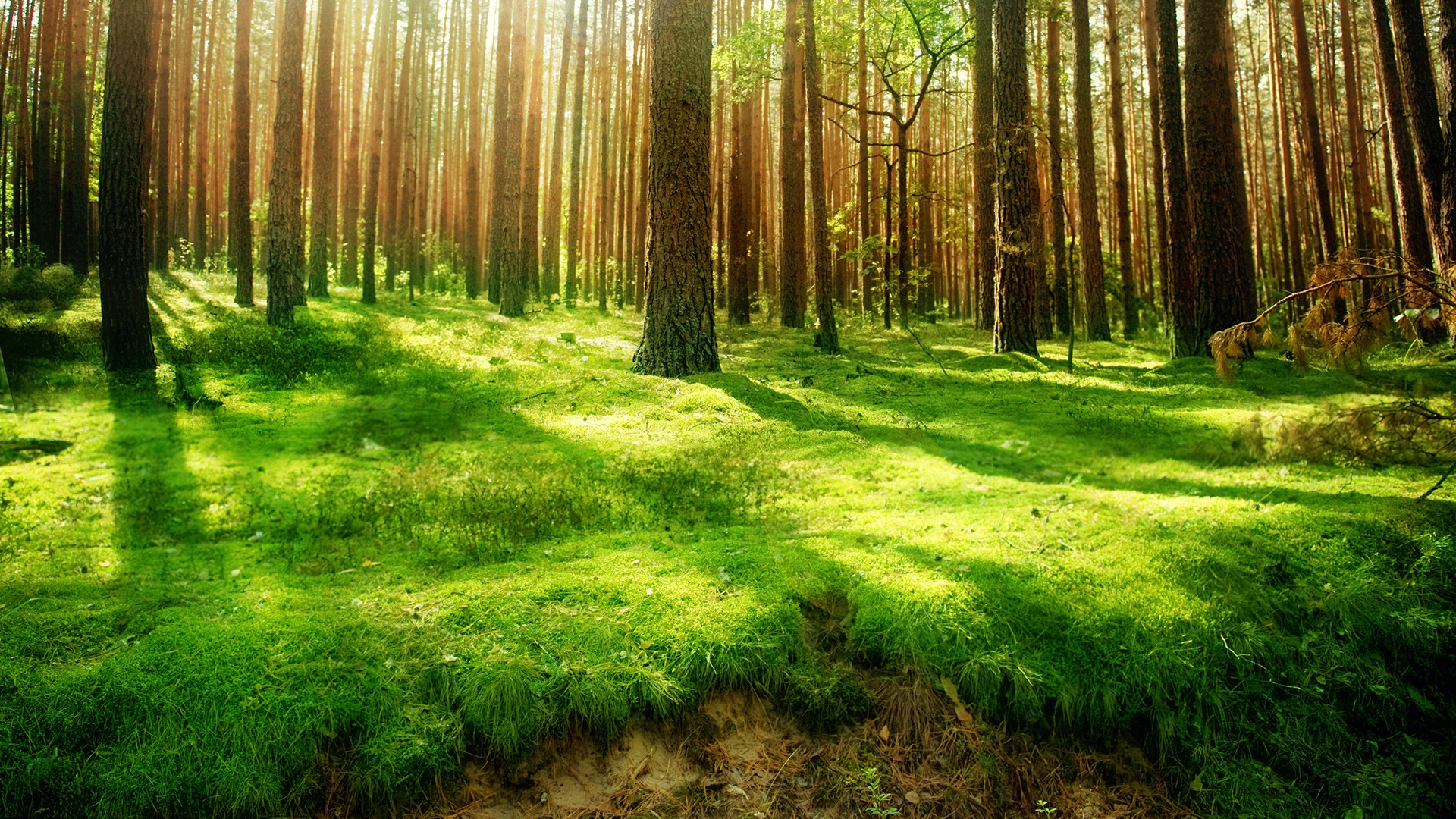 Forest high resolution clipart.