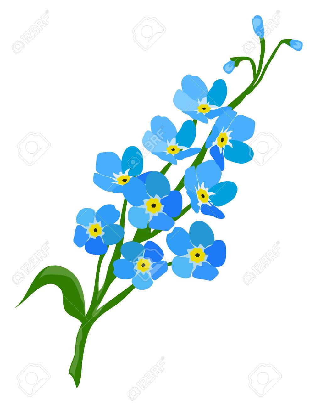 Vector illustration of a forget me not flower.