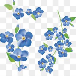 Nature Forget Me Not PNG and Nature Forget Me Not.