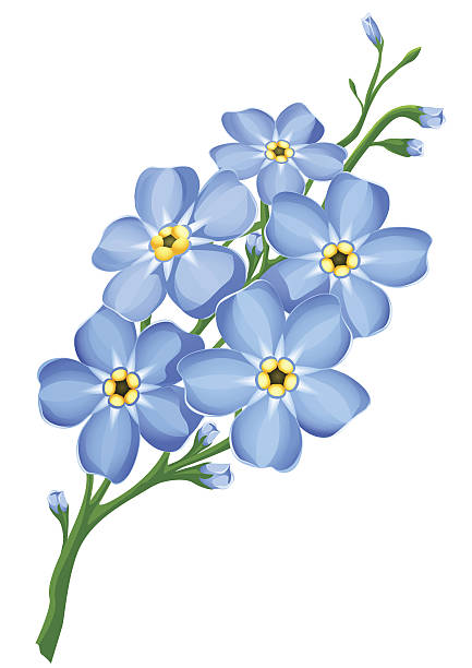 Forget Me Not Silhouettes Clip Art, Vector Images & Illustrations.