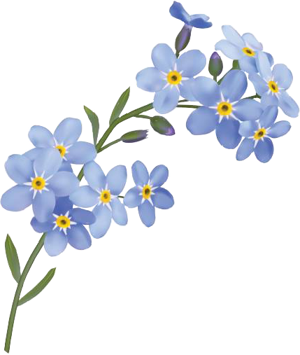 HD #forgetmenot #flowers #freetoedit.