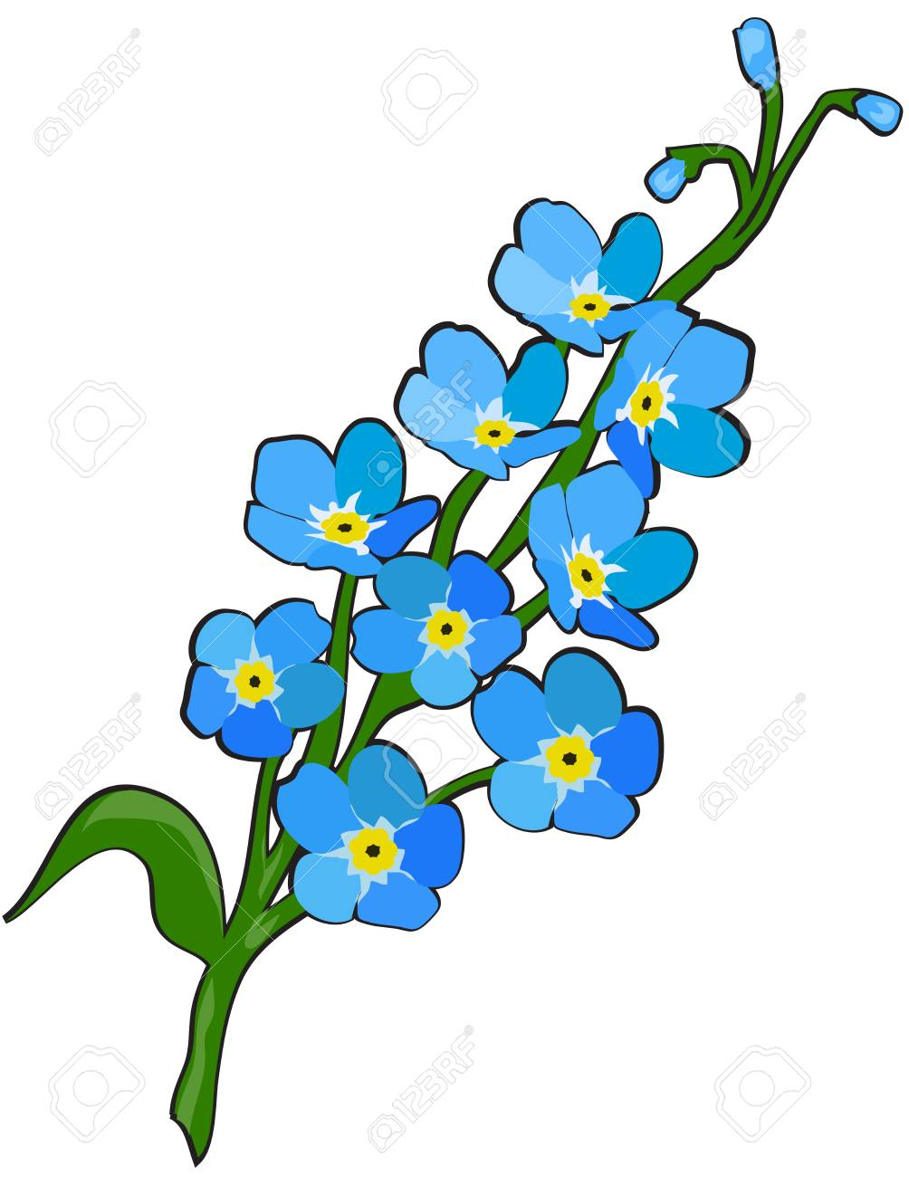 Forget me not flowers vector illustration..