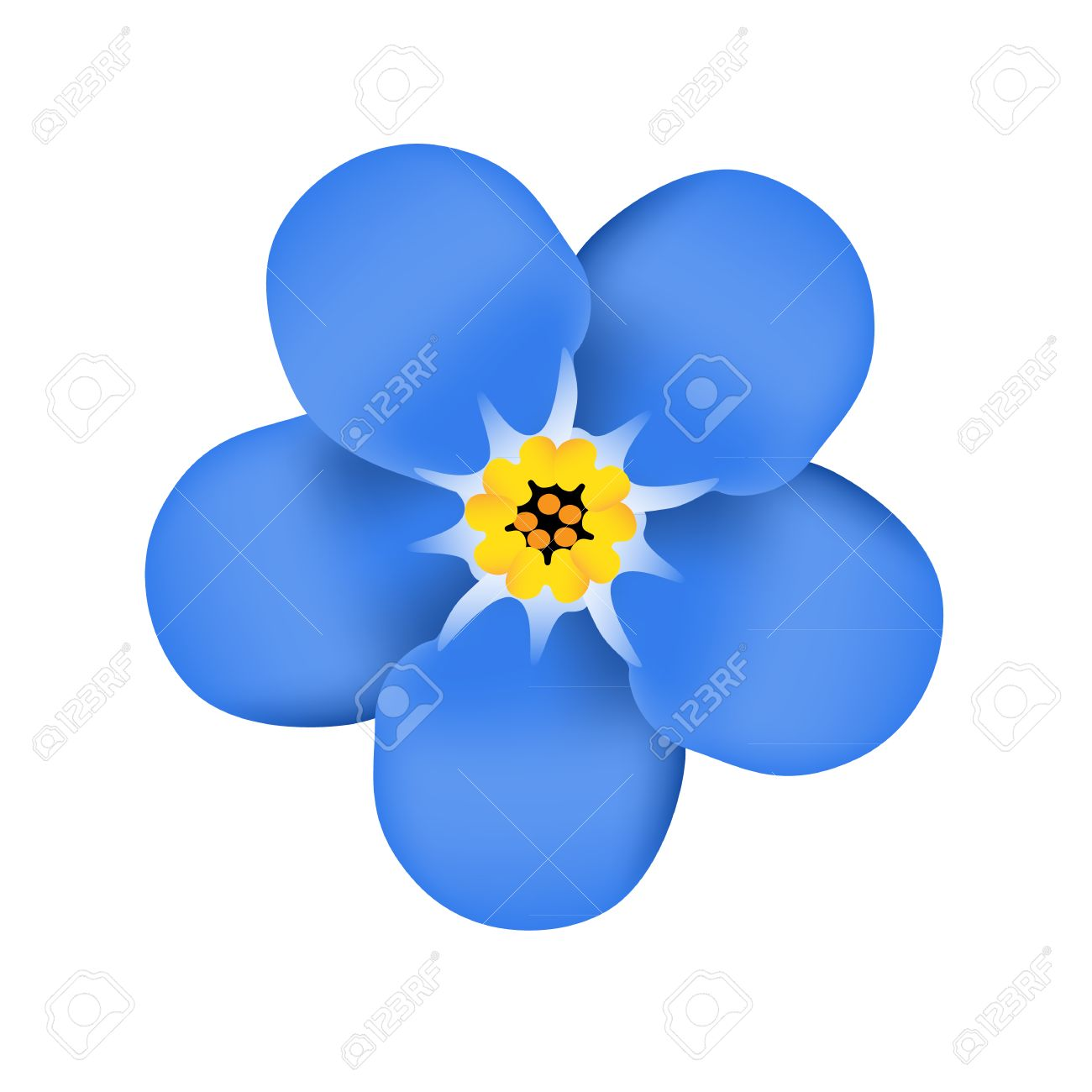 Forget me not flower blossom. Blue flower. Vector illustration.