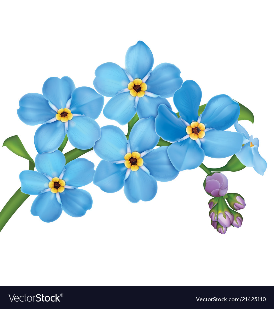 Bunch of blue forget me not flowers with leaves.