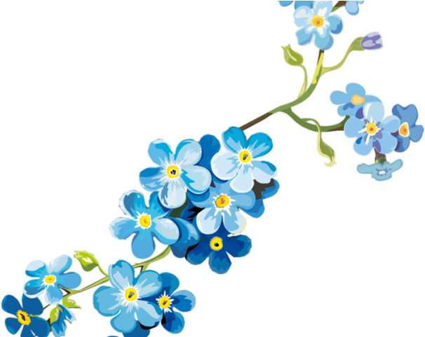 Forget Me Not Clipart Clear Background.