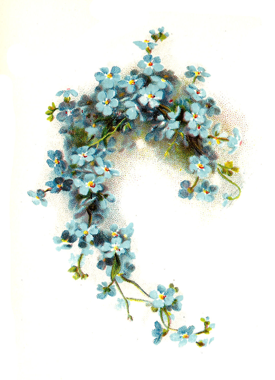 Vector Clip Art of Forget me not Flowers.