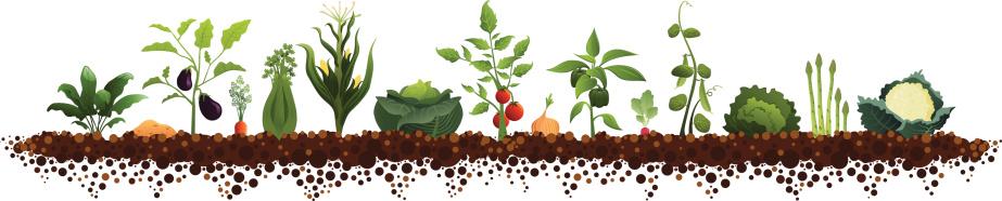 Formal Garden Clip Art, Vector Images & Illustrations.