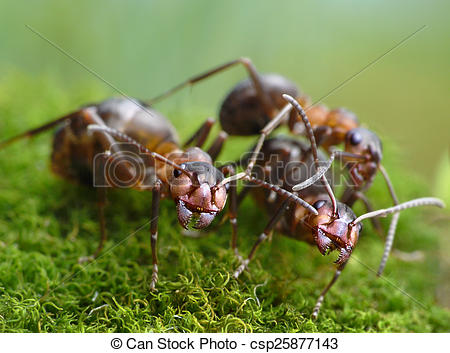 Stock Photo of three ants formica rufa.