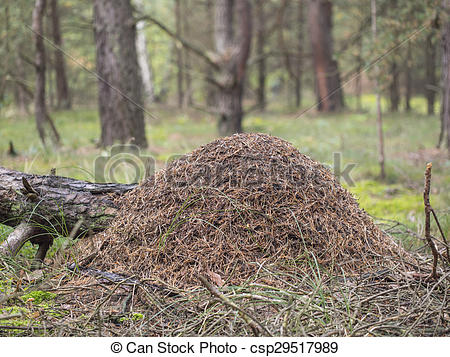 Pictures of Red wood ant, anthill.