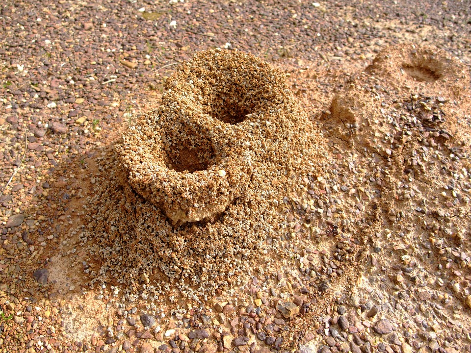 Free photo Nature Sand Hole Formicary Ants Anthill.
