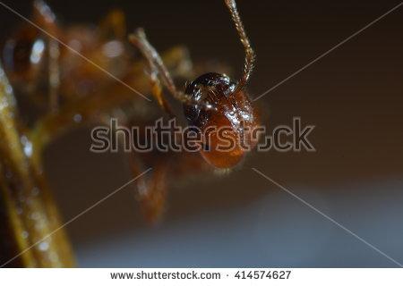 Formicidae Stock Vectors & Vector Clip Art.