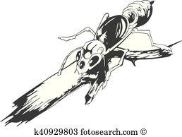 Formicidae Clip Art EPS Images. 29 formicidae clipart vector.
