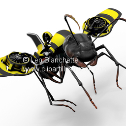 Formicidae Stock Images.