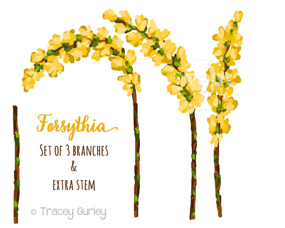 Forsythia Clip Art Set Wedding Invitation Paper Goods Clip.