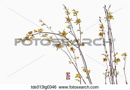 Stock Illustration of Forsythia in ink painting tds013tg0346.