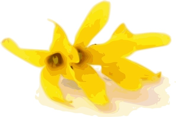Forsythia clip art Free vector in Open office drawing svg ( .svg.