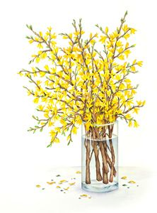 1000+ images about Forsythia on Pinterest.
