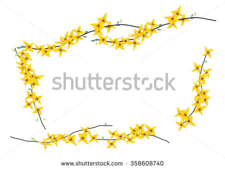 Forsythia Stock Vectors, Images & Vector Art.