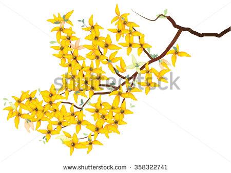 Forsythia flowers clipart #4