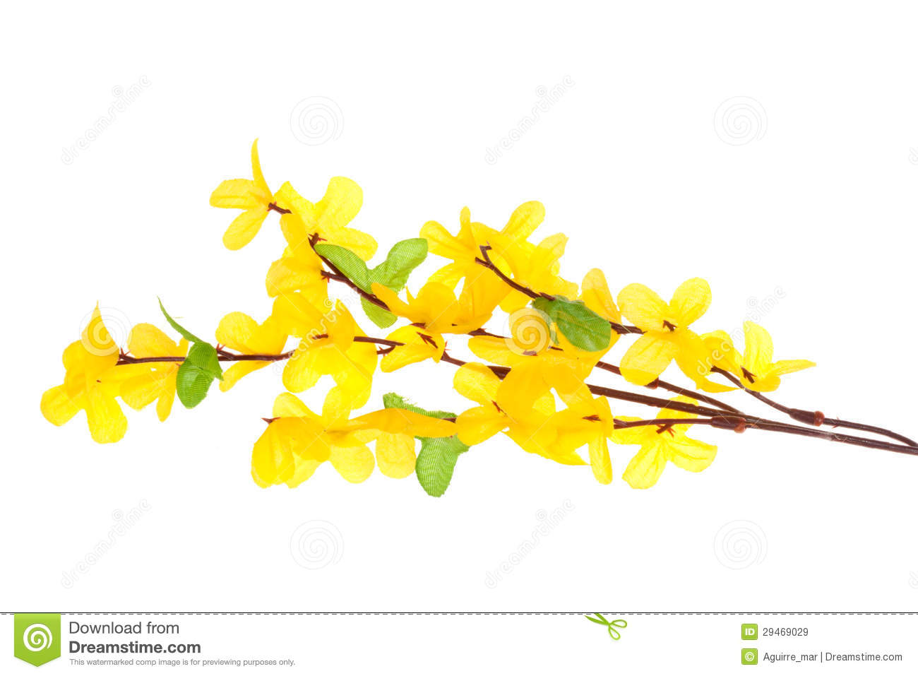 Forsythia Flowers Royalty Free Stock Images.