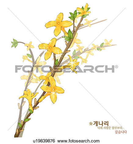 Stock Illustration of flowers, nature, plants, forsythia, plant.