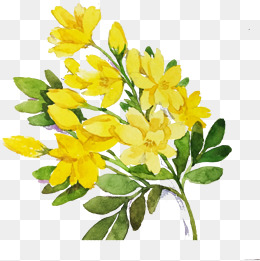 Forsythia Png, Vector, PSD, and Clipart With Transparent Background.