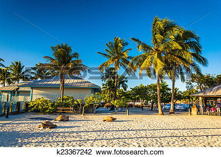 Stock Photo of Palm trees on the beach in Fort Myers Beach.