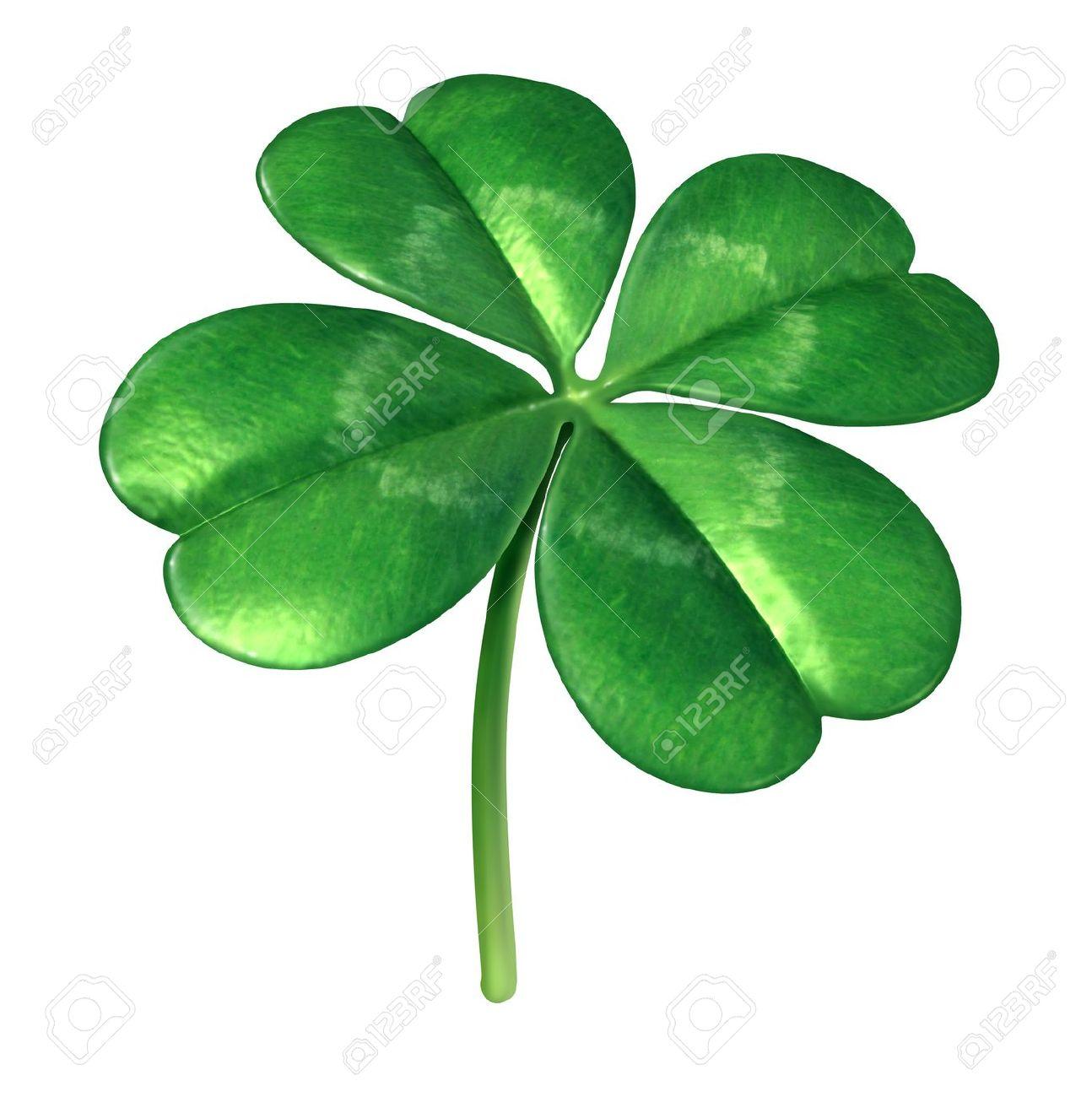 Four Leaf Clover Plant As An Irish Symbol For A Green Lucky Charm.