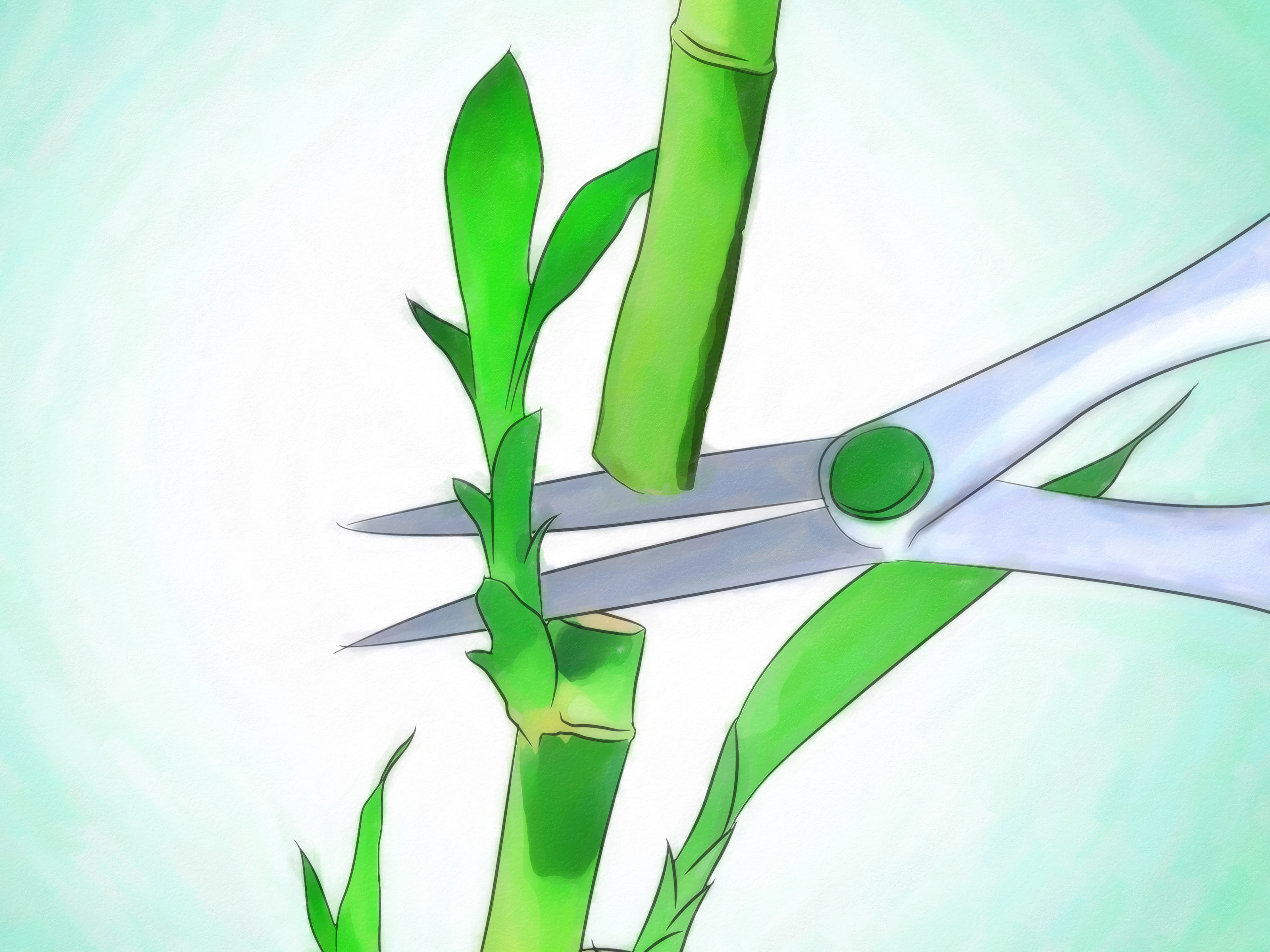 How to Grow Lucky Bamboo: 12 Steps (with Pictures).