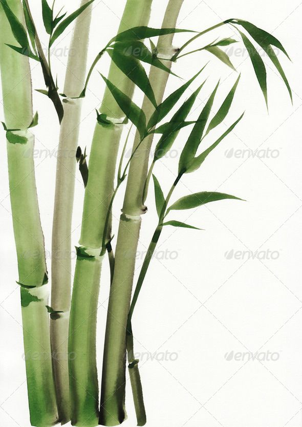 1000+ ideas about Chinese Bamboo Tree on Pinterest.
