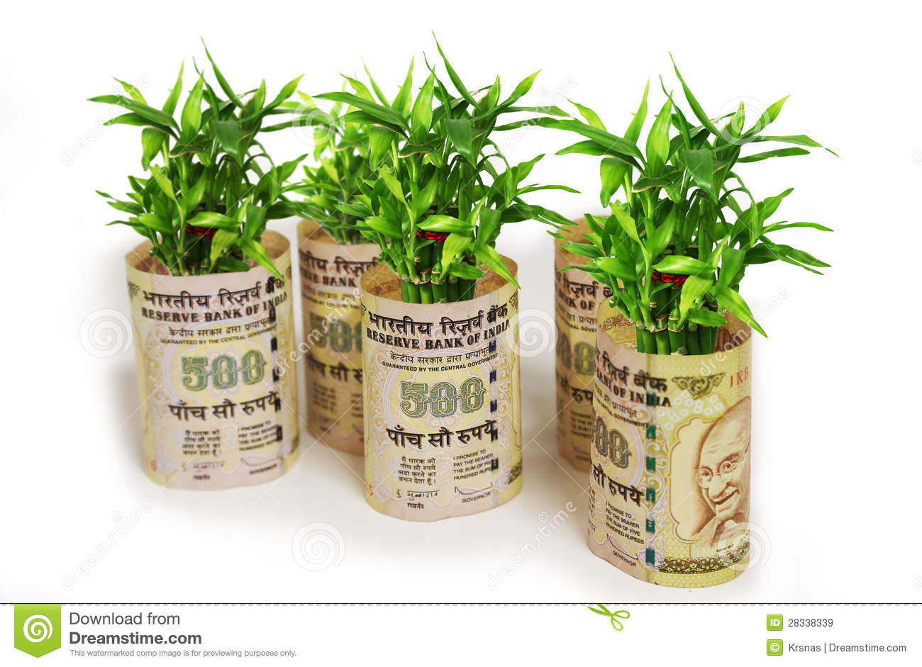 Fortune Plant Saplings Wrapped In Indian 500 Rupees On White.