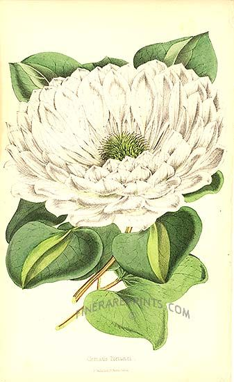 1000+ images about Art/Botanical Illustrations on Pinterest.