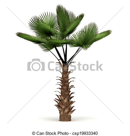Drawing of Single Palm Tree.