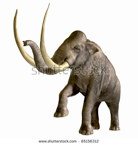Mammoth Fossil Stock Photos, Royalty.