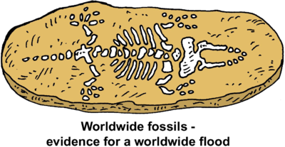 Image download: Fossil Evidence.