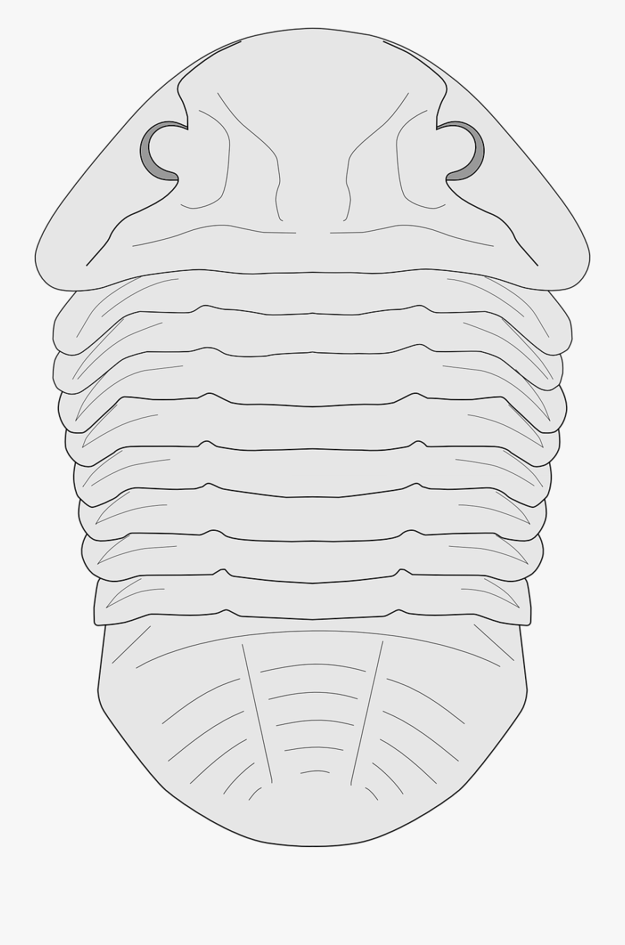 Transparent Fossil Clipart Black And White.