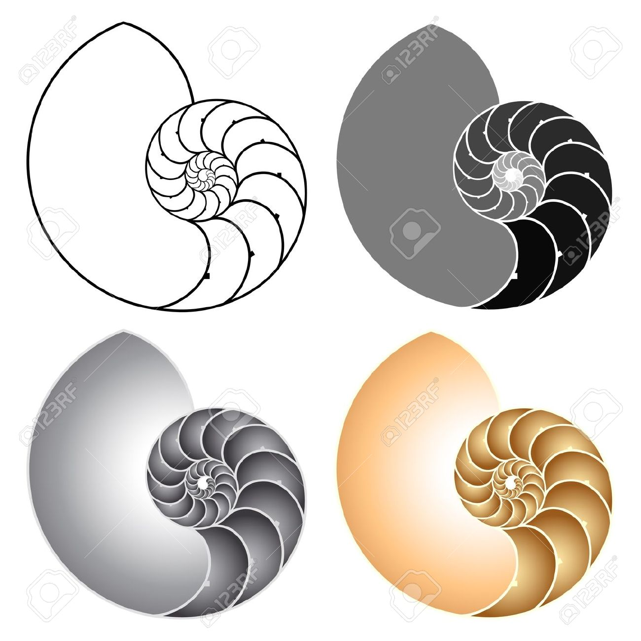 Nautilus Royalty Free Cliparts, Vectors, And Stock Illustration.