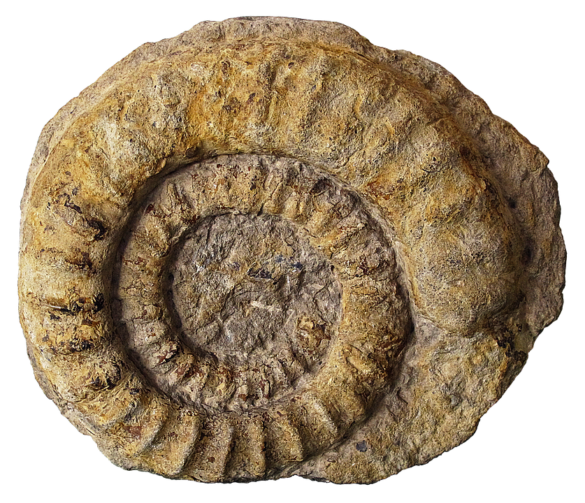 Fossil Png (99+ Images In Collection) Pa #503548.