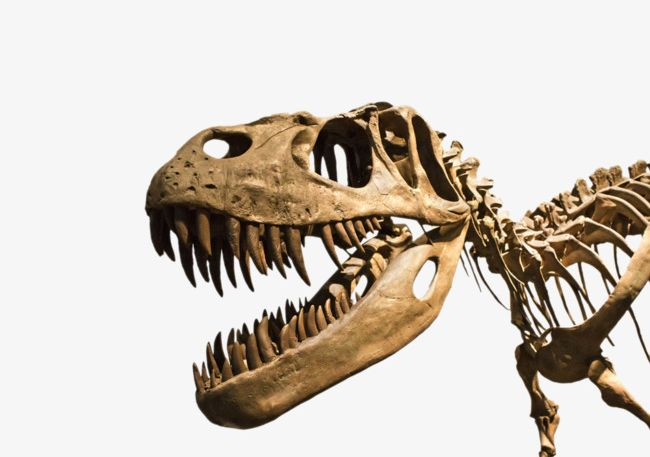 Hd Dinosaur Fossils PNG, Clipart, Ancient, Ancient Animal, Animal.